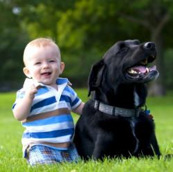 Как объяснить ребенку, что нужно остерегаться посторонних собак?