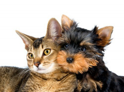 Почему ссорятся кошки и собаки?