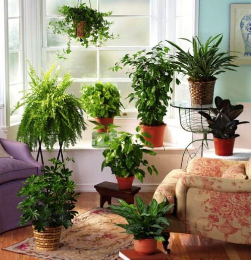 Первый опыт в разведении комнатных растений или хотела как лучше...