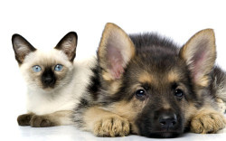 Выбираем домашнее животное для ребенка