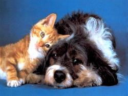 Проблемы домашних животных