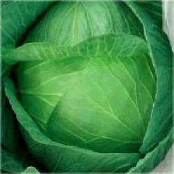 Интересные факты о капусте. Использование в лечебных целях