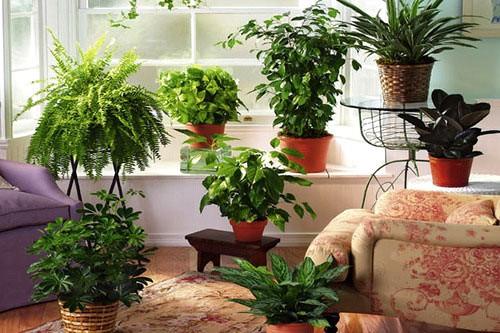 Какие комнатные растения лучше очищают воздух