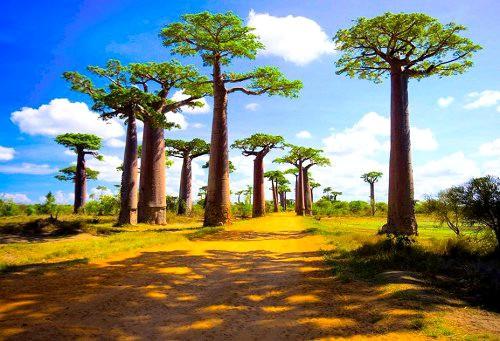 Туры в Анцирабе, Мадагаскар