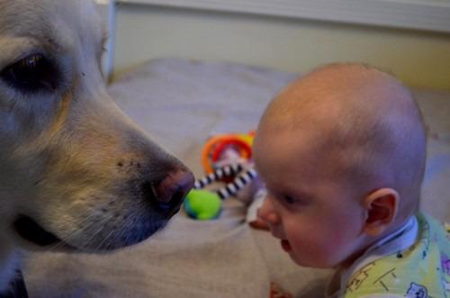 Собака и ребенок или как избавиться от шерсти