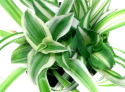 Какие комнатные растения выбрать,  чтобы наполнить комнату кислородом