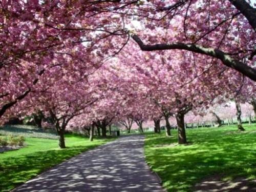 Пора отдыхать. Японская весна