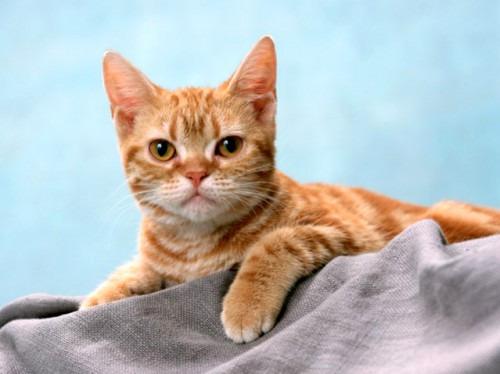 Домашние кошки: ласковые, независимые, загадочные