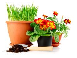 Значение домашних цветов по фен-шуй
