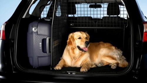 Как перевезти собаку в другой город?
