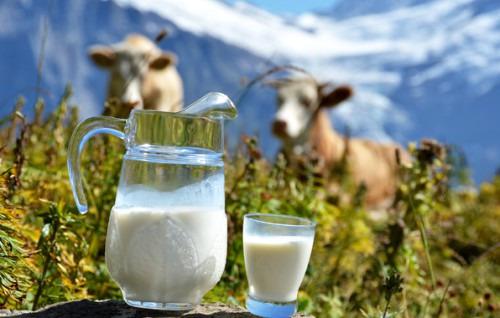 О пользе парного молока